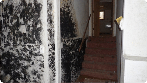 Mold On Walls In Stairwell