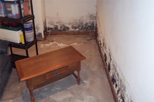 Basement Mold Remediation