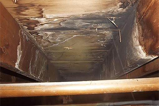 Crawl Space Mold Removal